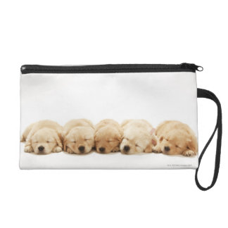 The puppies of the Golden Retriever Wristlet
