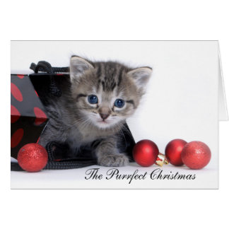 The Purrfect Christmas Card