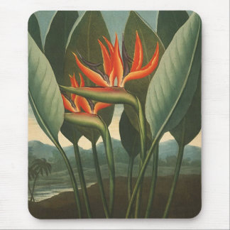 'The Queen (Bird of Paradise)' - Temple of Flora Mouse Mat