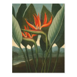 'The Queen (Bird of Paradise)' - Temple of Flora Postcard