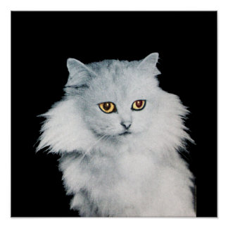 THE QUEEN OF WHITE CATS POSTER