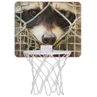 the raccon  Mini Basketball Hoop