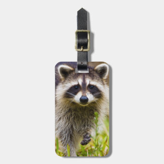 The raccoon, Procyon lotor, is a widespread, 3 Luggage Tag