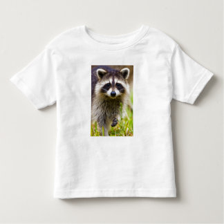 The raccoon, Procyon lotor, is a widespread, 3 Toddler T-Shirt