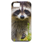 The racoon, Procyon lotor, is a widespread, 3 Case For The iPhone 5