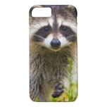 The racoon, Procyon lotor, is a widespread, 3 iPhone 7 Case
