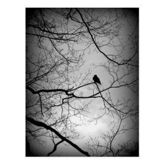 The Raven Postcard