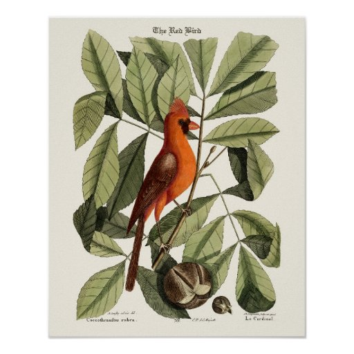 The Red Bird - Seligmann Posters