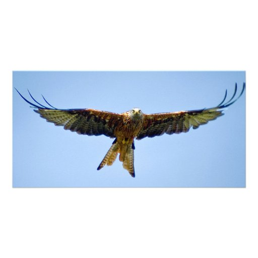 The Red Kite Photo Greeting Card