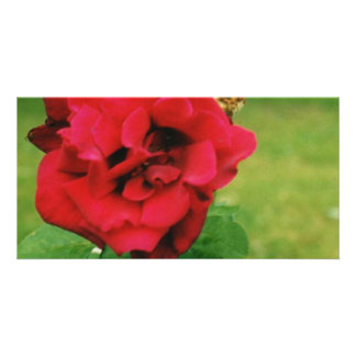 The Red Rose Photo Cards