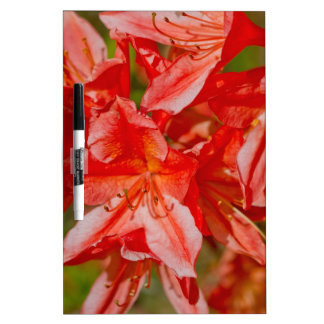 The red wild flower dry erase whiteboards