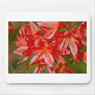 The red wild flower mousepads