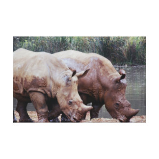 The rhino babies are growing up stretched canvas prints