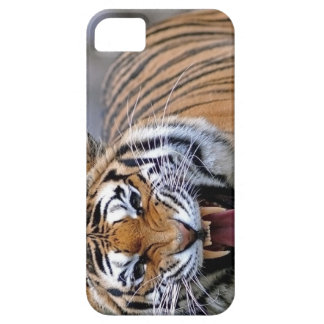 The Roar of the TIger iPhone 5 Cover
