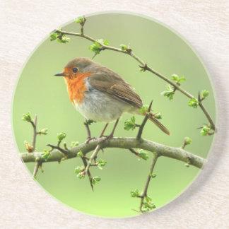 The Robin Coaster