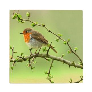 The Robin Wood Coaster
