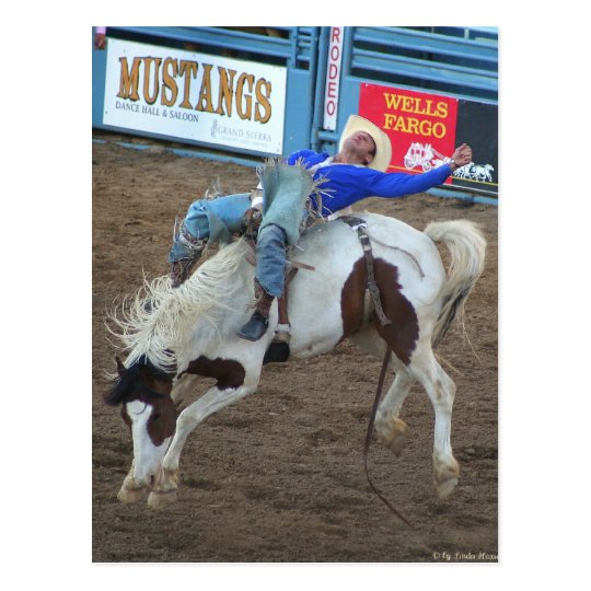 The Rodeo Collection - Wild Ride Postcard
