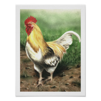 The Rooster Poster