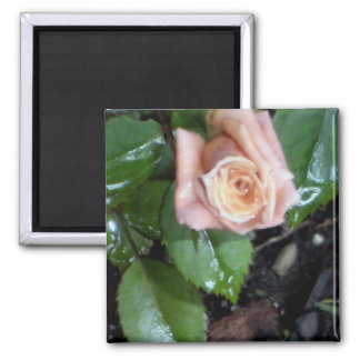 The Rose Square Magnet