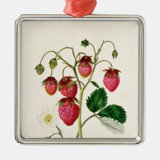 The Roseberry Strawberry, engraved by Watte Christmas Ornament