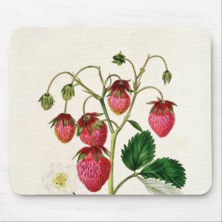 The Roseberry Strawberry, engraved by Watte Mouse Mat
