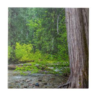 The Ross Creek Cedars Scenic Area Tile