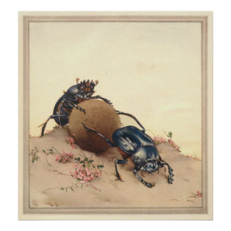 THE SACRED BEETLE - Insect Book Illustration Poster
