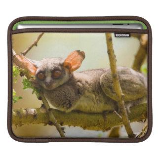 The Senegal Bushbaby (Galago Senegalensis) iPad Sleeve