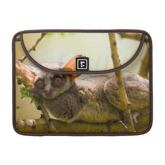 The Senegal Bushbaby (Galago Senegalensis) Sleeve For MacBook Pro