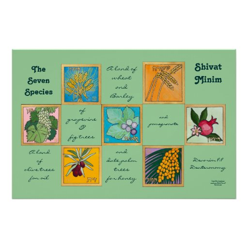 The Seven Species or Shivat Minim Poster