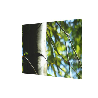 The shadows of the bamboo tree canvas print