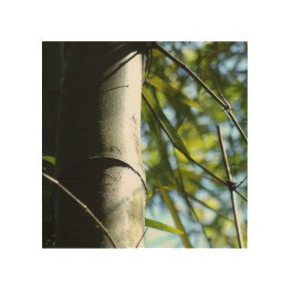 The shadows of the bamboo tree wood print