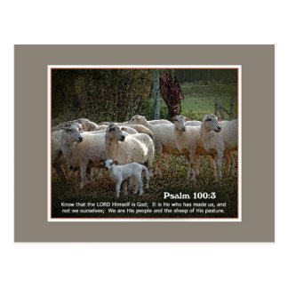 The Sheep of His PasturewScripture Postcard