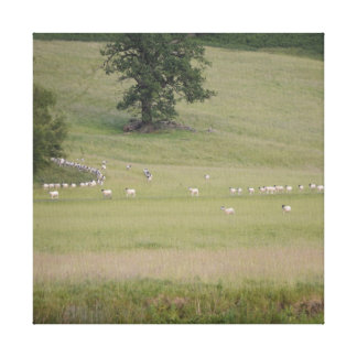 'The Sheepwalks' Printed Canvas