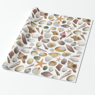 The Shell Collector Wrapping Paper