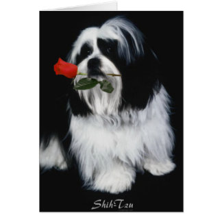 The Shih Tzu Dog Card