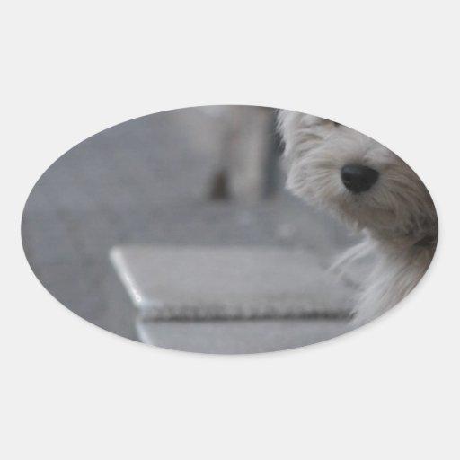 The Shy Doggy Sticker
