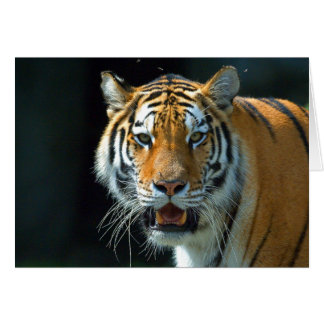 The Siberian Tiger Greeting Cards