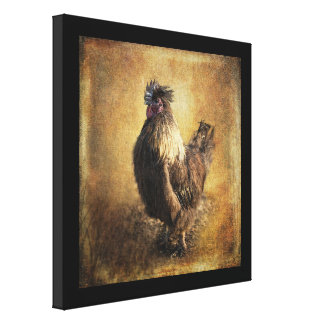 The Silkie Stretched Canvas Prints