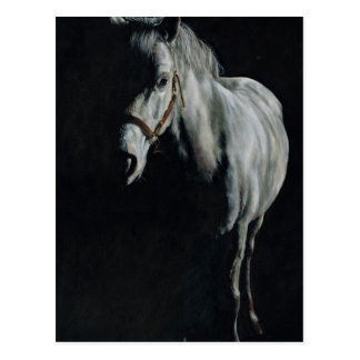 The Silver Horse in the shadows Postcard