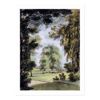The Sister Trees, Kew Gardens, plate 8 from 'Kew G Postcard