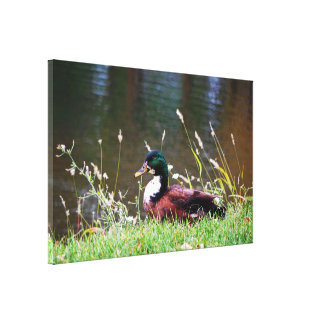 The Sitting Duck Gallery Wrap Canvas