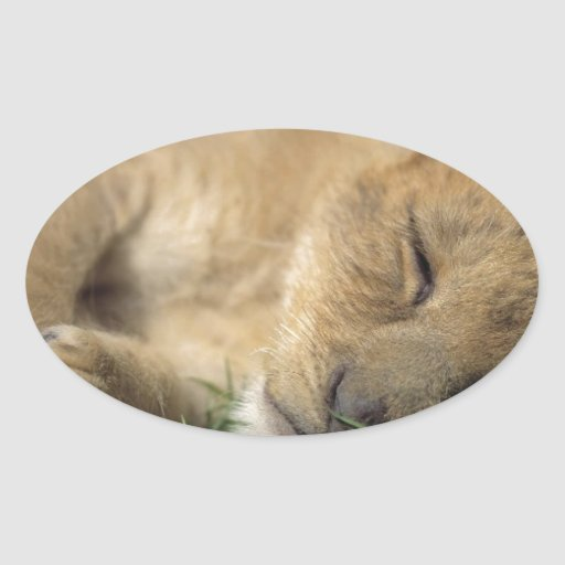The Sleeping Lioness Oval Sticker