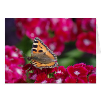 The Small Tortoiseshell butterfly on flowers Card