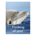 The smiling dolphin postcard
