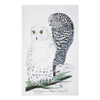 """""""The Snowy Owl ~official bird of Quebec"""" Poster"""