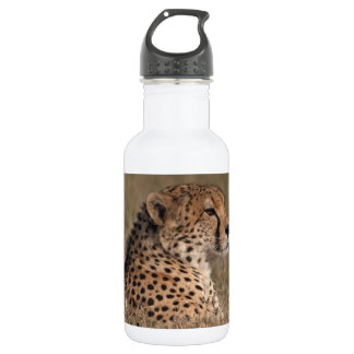 The Spotted Sphinx 532 Ml Water Bottle