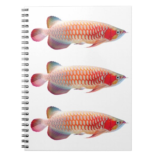 "The spring note ""of Super Red Arowana"" Notebook"