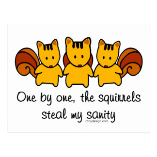 The squirrels steal my sanity post card