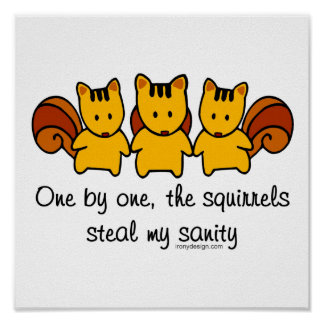 The squirrels steal my sanity poster
